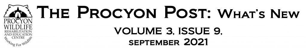the procyon post sept 2021