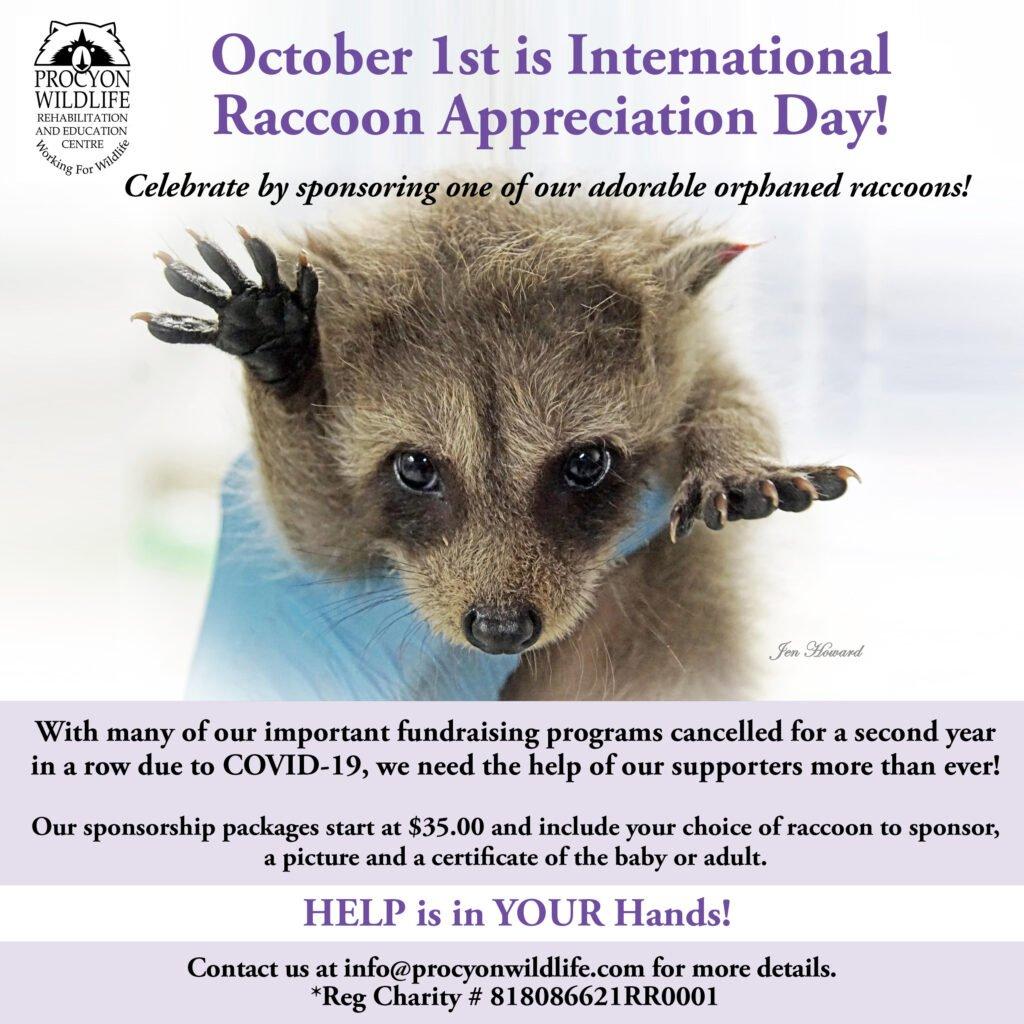 International-Raccoon-Appreciation-Day
