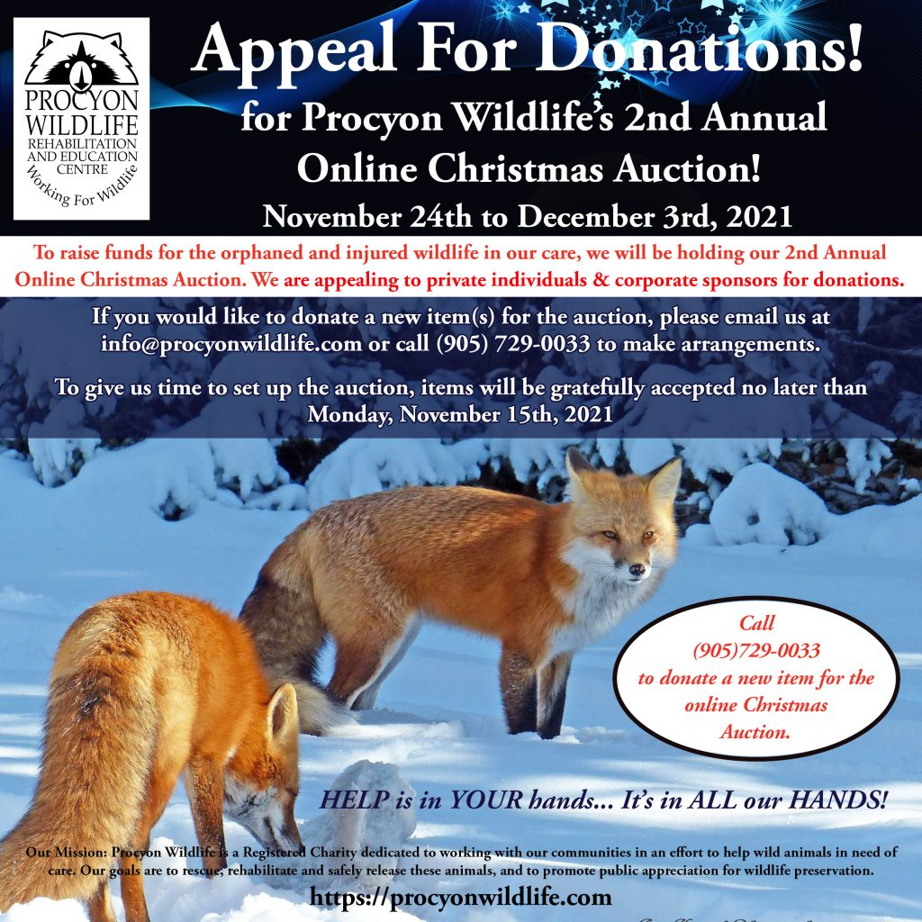Online Procyon Wildlife Christmas Auction Appeal 2021