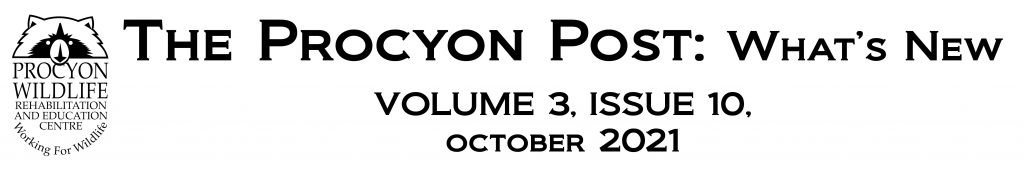 the procyon post oct 2021